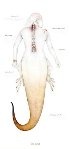 teniagua-vista-dorsal
