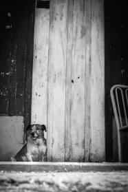 Lulu visita a casa velha
