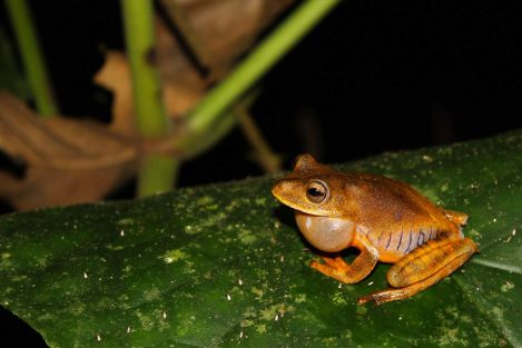 01-waq-new-frog-species